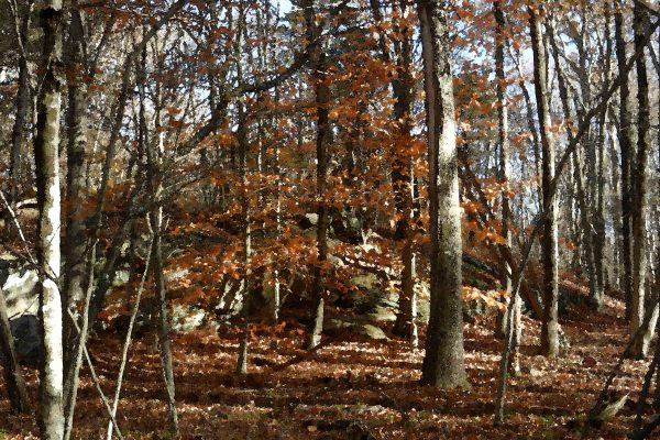 Canfield Woods 5