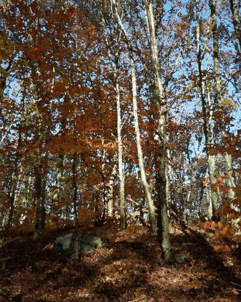 Canfield Woods 6