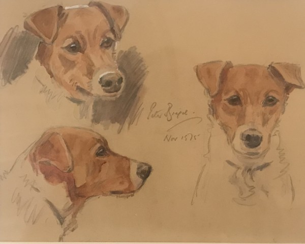 Jack Russell Sketches