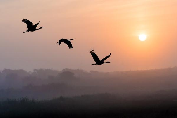 Morning Flight by Lindrel Thompson