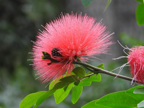 Pink Burst by Lisa Schwartz
