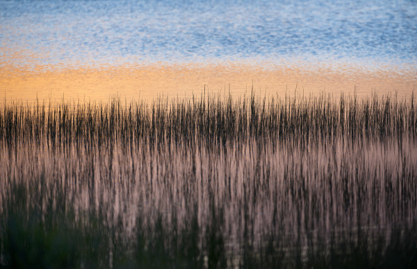 Gull Point Sticks at Dawn by Alexandra Nemeth