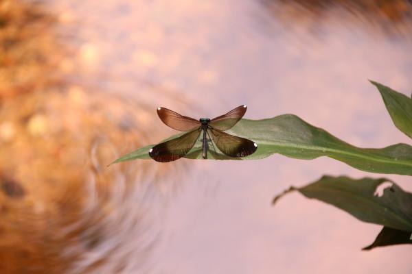 Creek Damsel by Meredith Treadway, RN