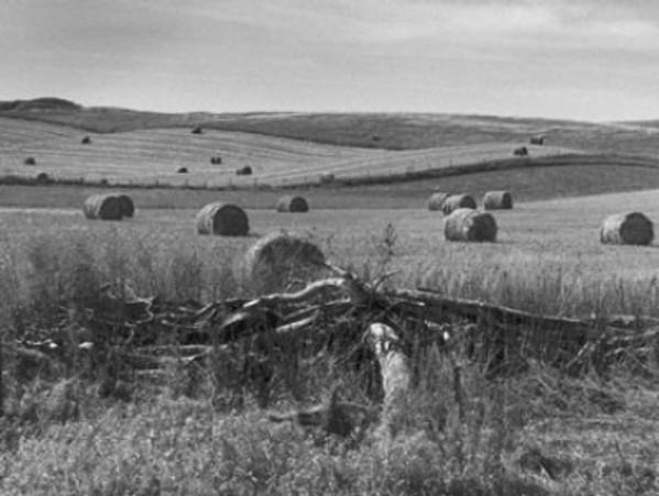 Sumner Road by Jean Lewis