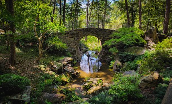 The Dream Bridge by Ryan Obremski, RN