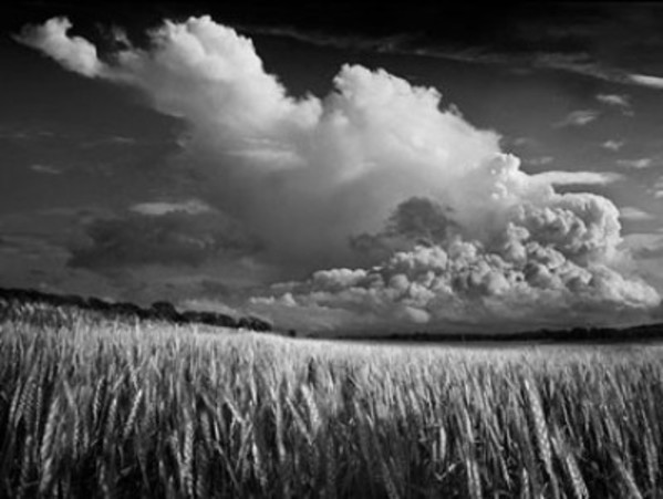 Winter Wheat by Daniel Coburn