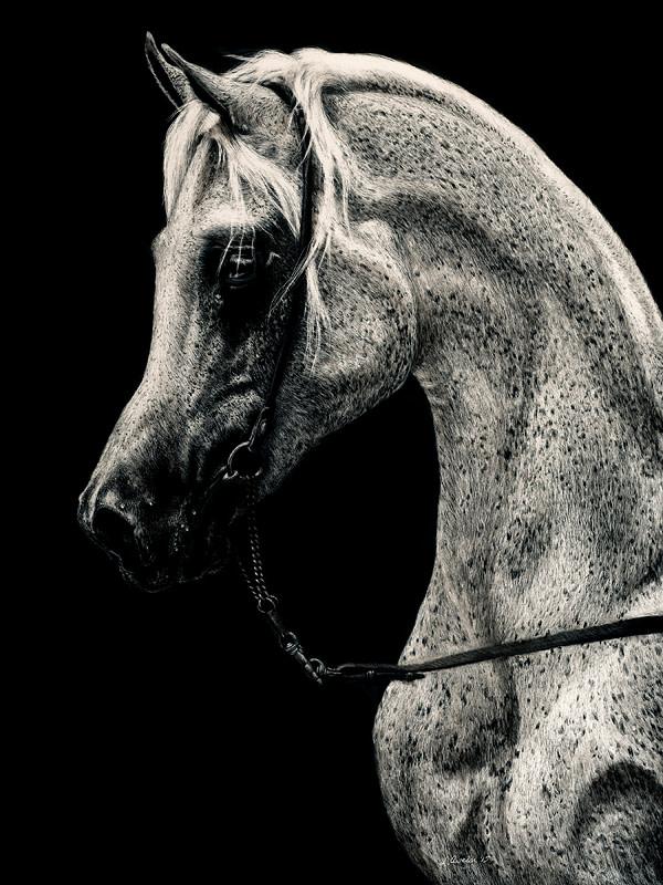 Refined Elegance by Lonetta Avelar
