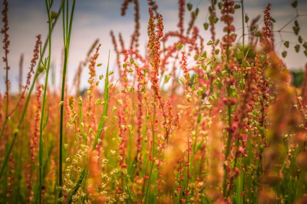 Pink Wildflowers by Paula Karonika