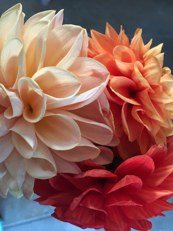 Floral Folds by Kimberley DuBose