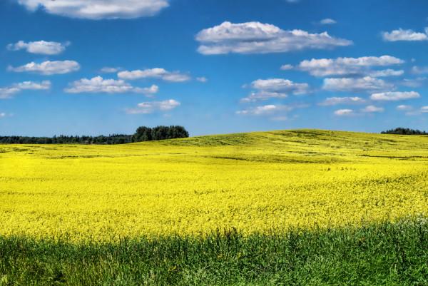 Van Gogh Would Have a Field Day by Alexandra Jordankova