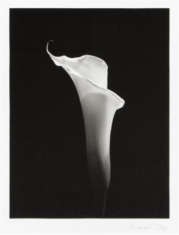 American School, Calla Lily, Silver Gelatin Print, 1989