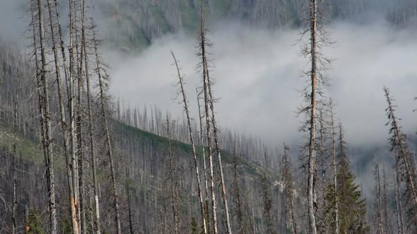 The Kootenay Burn - A Four Seasons Series - #34 by James McElroy