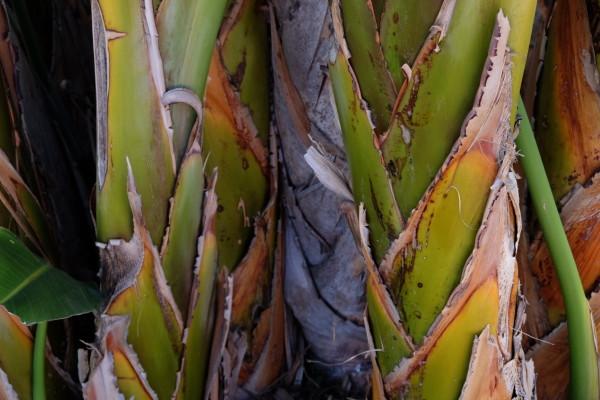Palm Tree LA 2018 by James McElroy