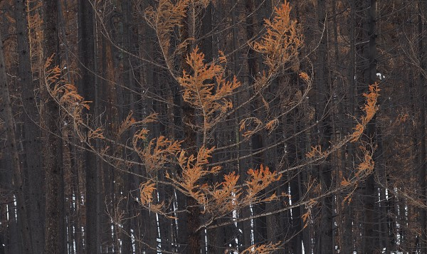 The Kootenay Burn  2018 - Red by James McElroy