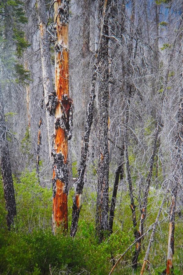 The Kootenay Burn - A Four Seasons Series - #35 by James McElroy