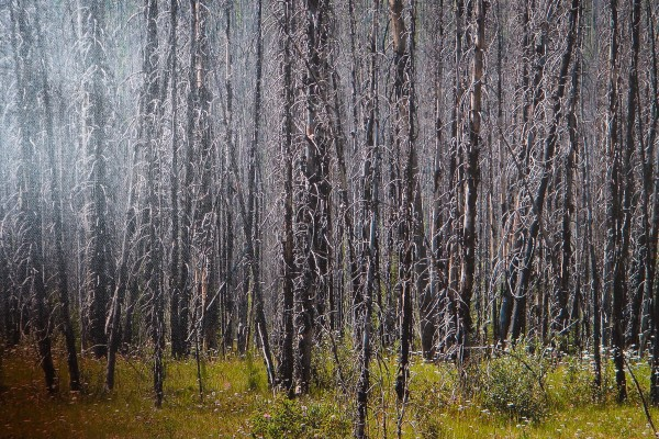 The Kootenay Burn - A Four Seasons Series - #36 by James McElroy
