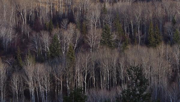 Wetland Trees, Wilmer, B.C. 2018 by James McElroy