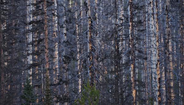 The Kootenay Burn 2017 - Blue by James McElroy