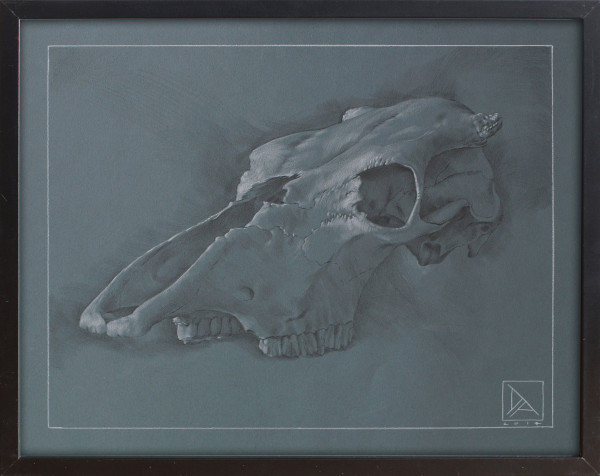Skull Study #2 by Daevid Anderson