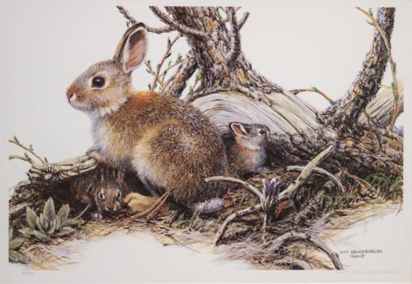 Rabbit by Amy Brackenbury