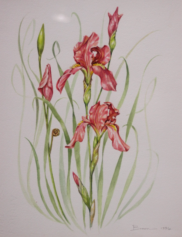 Red Iris by Baka E. Brown