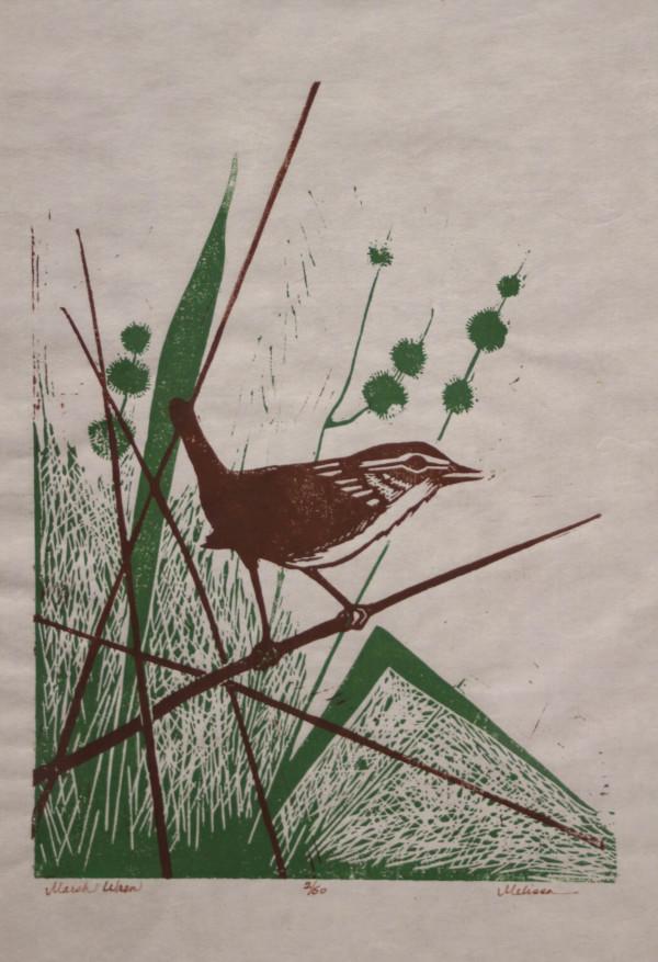 Marsh Wren by Melisse Carr