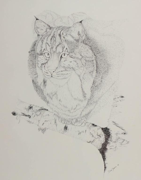 Bobcat by Dana Harter