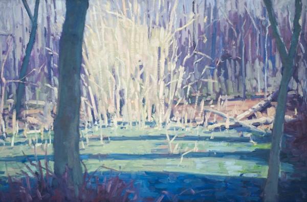Wildcat Spring by David Williams