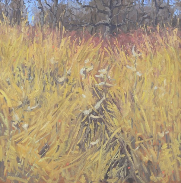 Milkweed and Broomsedge by David Williams