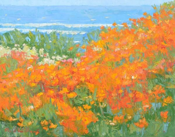 Seaside Poppy by David Williams