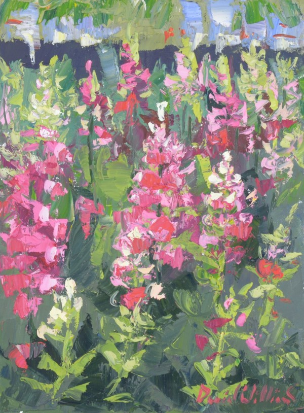 Foxglove by David Williams