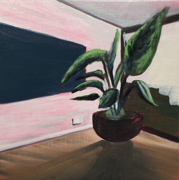 Plant in a room by Mathew Tucker