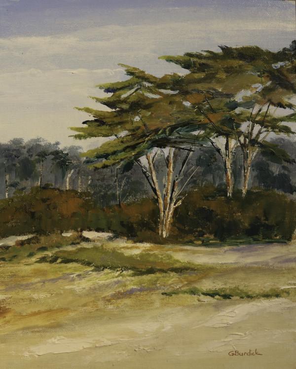 Coastal Cyress by Ginny Burdick
