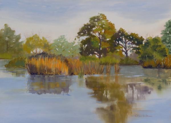 Wetlands Reflection by Ginny Burdick