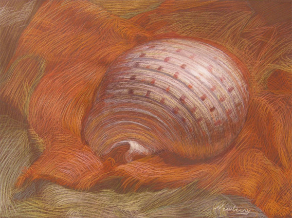 Newberry, Shell on Orange Linen, pastel by Michael Newberry