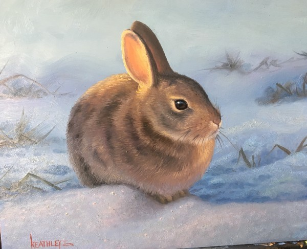 Cute little bunny by Mark Keathley