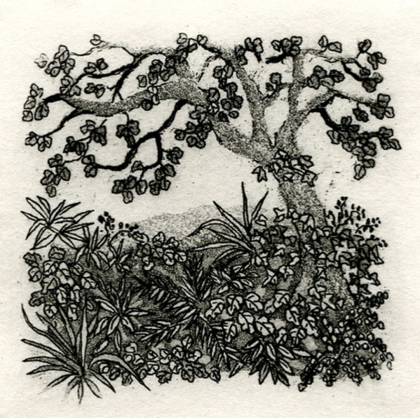 Little glade by stephanie Jane Rampton