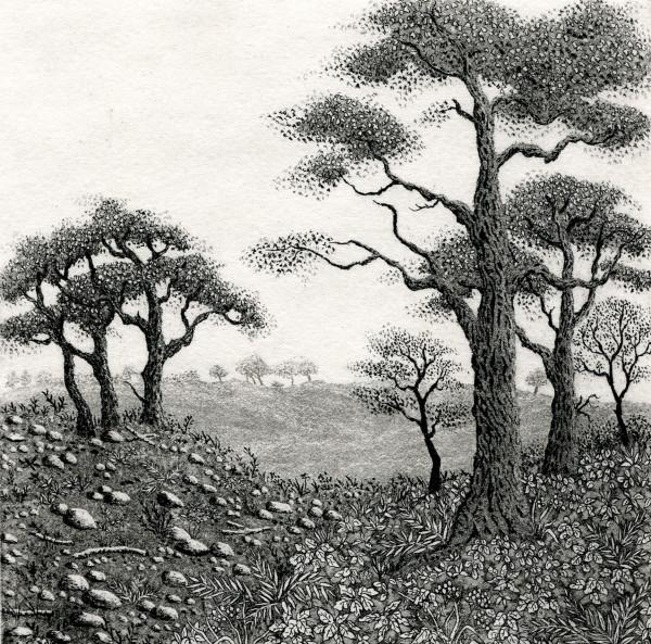 Edge of the woods by stephanie Jane Rampton