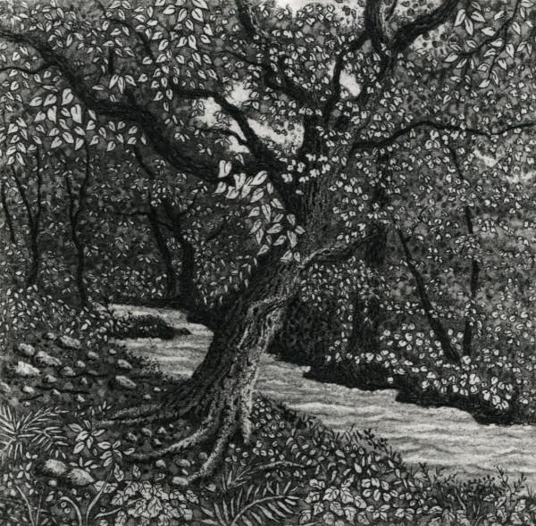 Lavant stream by stephanie Jane Rampton