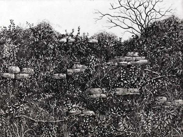 Fontley hedgerow by stephanie Jane Rampton