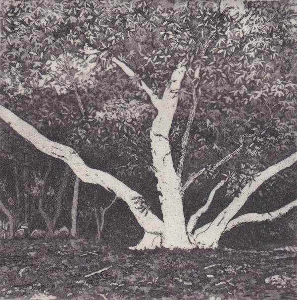 birdwood II by stephanie Jane Rampton