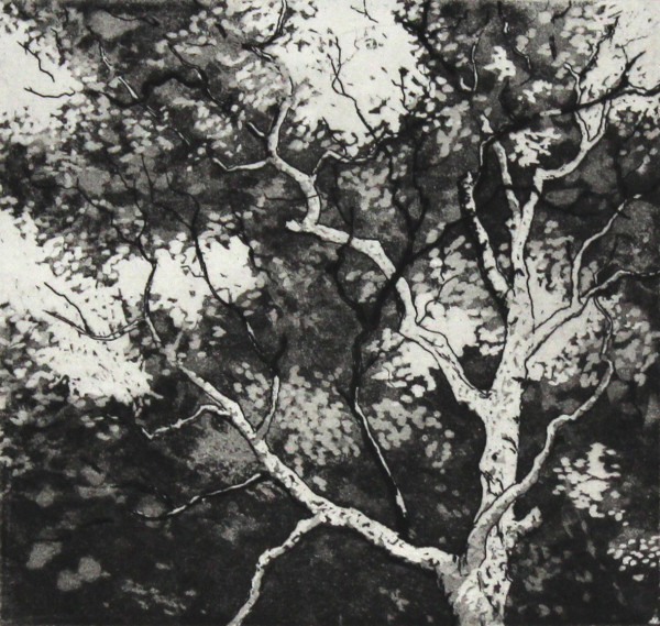 canopy by stephanie Jane Rampton
