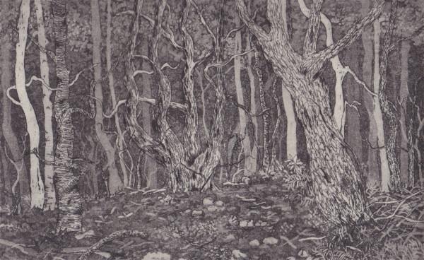cradle mountain II by stephanie Jane Rampton