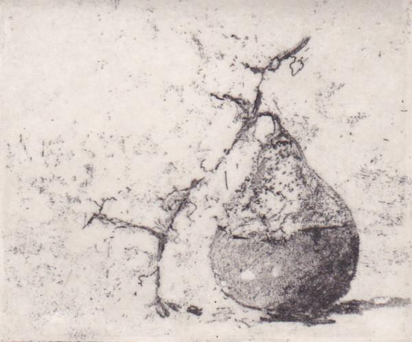 gourd II by stephanie Jane Rampton