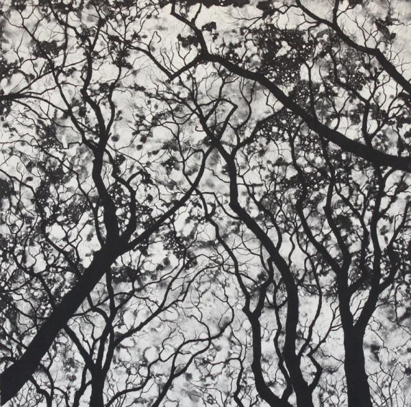 nightfall by stephanie Jane Rampton