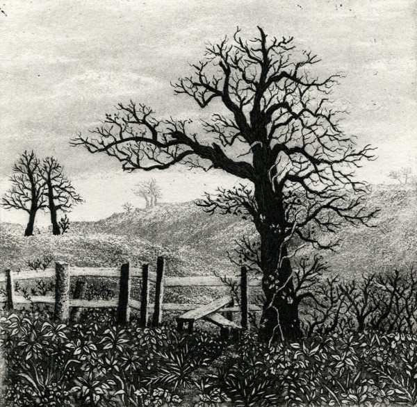 old tree and stile by stephanie Jane Rampton