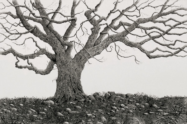 saint stephen's oak by stephanie Jane Rampton