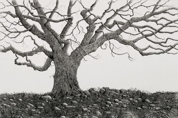 saint stephen's oak by stephanie Jane Rampton