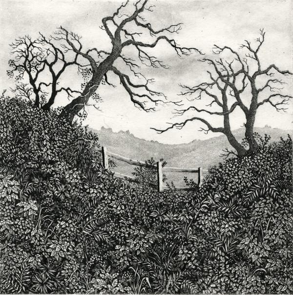 south downs by stephanie Jane Rampton