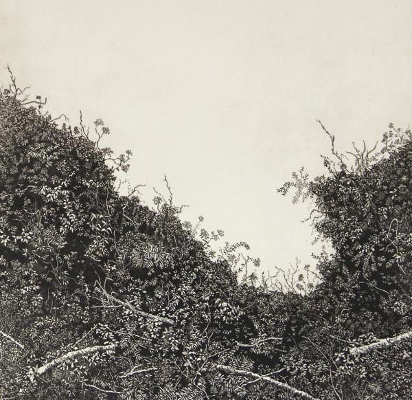 spurlings hedgerow by stephanie Jane Rampton